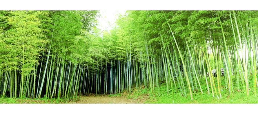 포토/대나무
