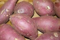 식품/ 고구마…  조선 영조때 일본 쓰시마 섬에서 온 고구마  혈압 조절 및 회춘에 탁월한 건강식품