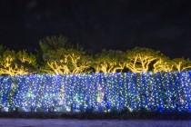 ■관광/제주 허브동산..  겨울 힐링 휴양지로 각광 받는 제주 허브동산  300만개 조명을 활용해 빛의 공원으로 재 탄생