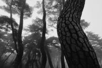 ■포토/배병우의 작품세계 … 새벽녘 소나무는  하늘과 땅을 연결하는 영혼의 매개체