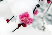 ■이달의 시/ 희망가  –  문병란